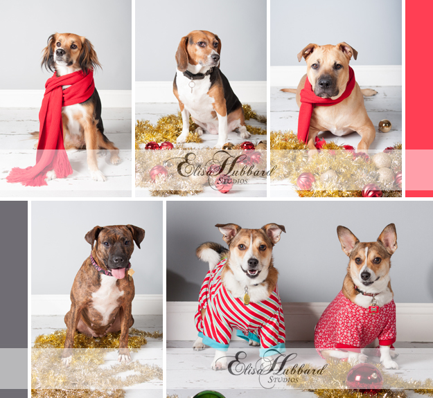 Christmas In Our Hometown, 2012, Dogs, Pet Photography, Holiday Photography, Studio Photography, Elisa Hubbard Studios