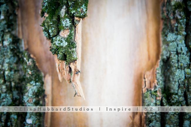 Inspire | 52 Fridays: 24